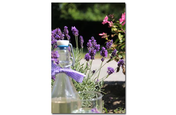 Lavendel-Sirup1